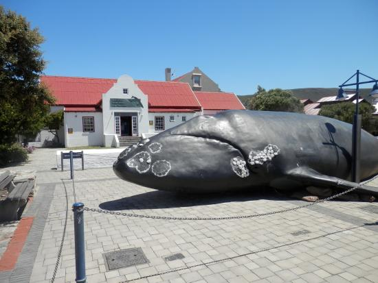 Hermanus, South Africa: Life-size model grabs your attention