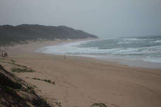 Maputaland Coastal Forest Reserve 사진