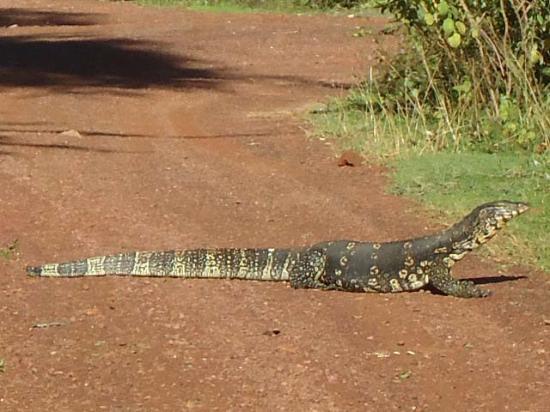 Madunandani Ayurveda Health Resort & Spa : Animals seen nearby