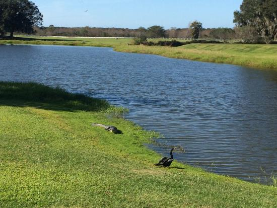 Sanlan RV Park Alligator And Bird Sunning Themselves Beside The Lake Next To Our