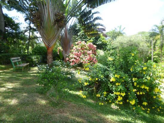 Bel ensemble d 39 arbres du jardin botanique de coconi for Restaurant jardin botanique