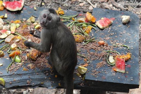 munchies - Picture of Bush Babies Monkey Sanctuary ...