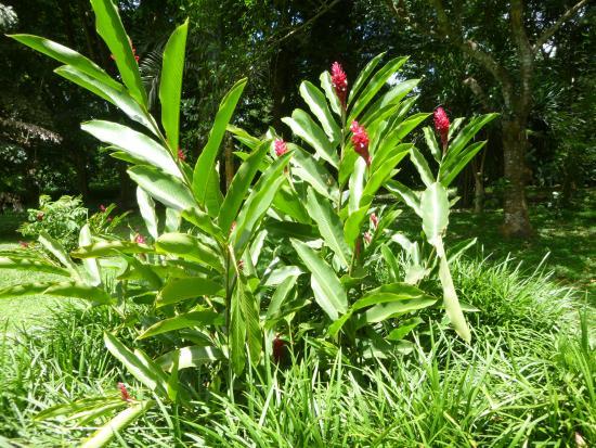L 39 appel rouge pourpr des alpinias picture of jardin for Jardin 93