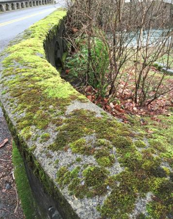 Hood River, OR: an enchanted forest blanketed in moss