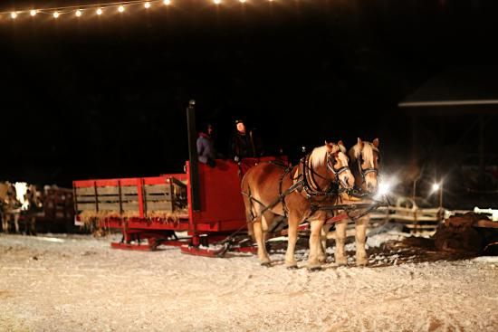 Armstrong, Canada : One set of horses and the sleigh for about 24 people.