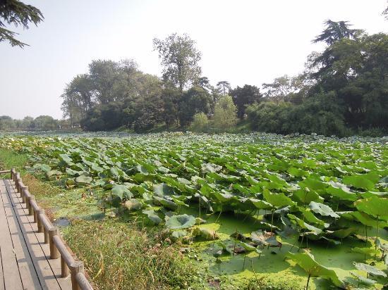 Xuanwu lake: 玄武湖