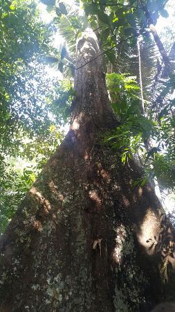 Juma Amazon Lodge: 20160108_093923_large.jpg