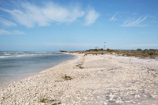 Honeymoon Island State Park Main Beach