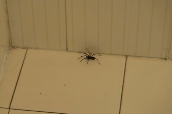 La Savoyarde: Spider in the bathroom