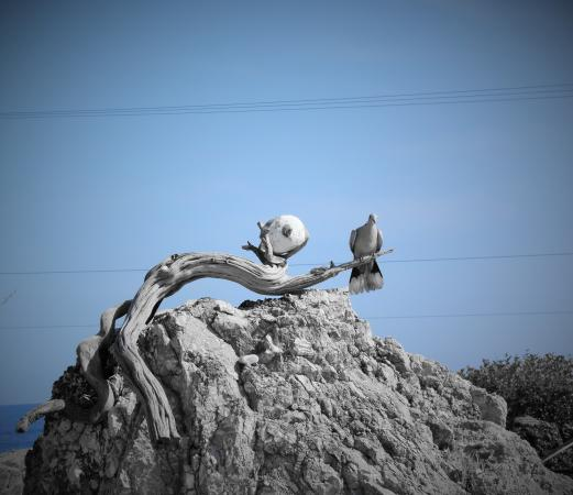 Aris Hotel: bird on a rock
