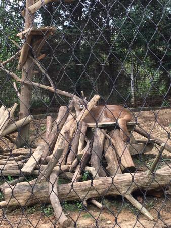 Jackson Zoo: photo1.jpg