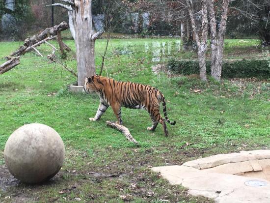 Jackson Zoo: photo2.jpg