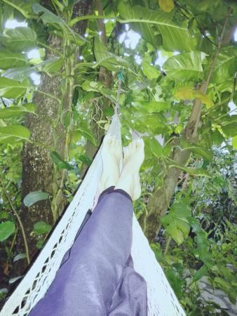 Hotel Casa Barcelona: Usted estará entre el Jardín tropical