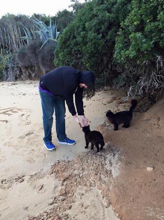 I Gatti di Su Pallosu: photo1.jpg