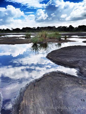 La Brea Pitch Lake: Reflective ponds