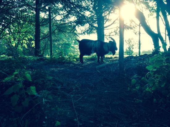 Jarze, Frankrike: Roméo au lever du soleil