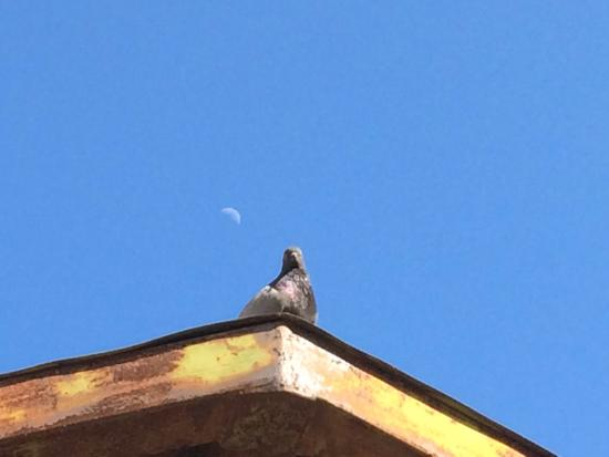 Grab des Caesar (Tomba di Cesare): A dove perches at the top of Caesars grave while the moon rises