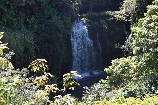 Honomu, هاواي: Beauty