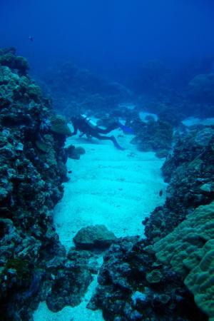 Pohnpei, Mikronezya Federal Devletleri: Great diving on an overcast, rainy day.
