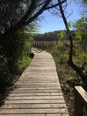 Arivaca, AZ: Boardwalk through the refuge