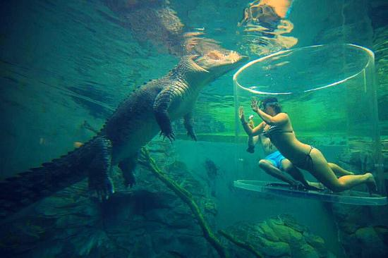 Image result for Crocosaurus Cove