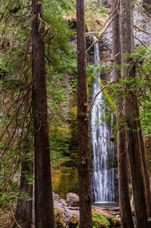 Marymere Falls Trail : Marymere Falls Through Trees