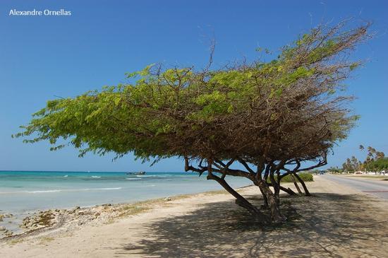 Praia em frente ao Aruba Beach Villas