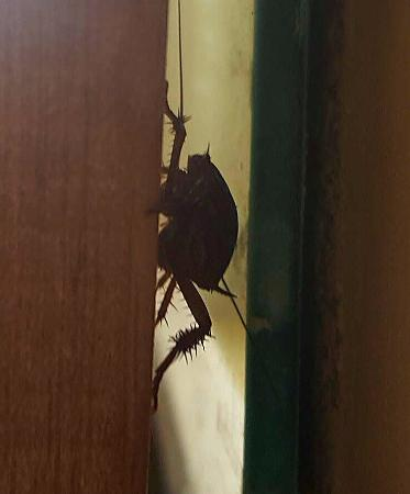 Hampton Inn & Suites San Juan: Cockroach n between mirror frame in bathroom