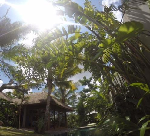 Luwak Ubud Villas: View from the private pool at Love Villa