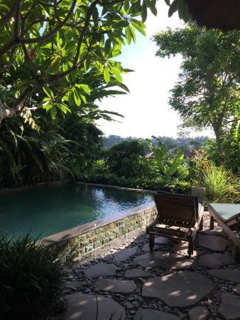 Ubud ArtVilla : Pool