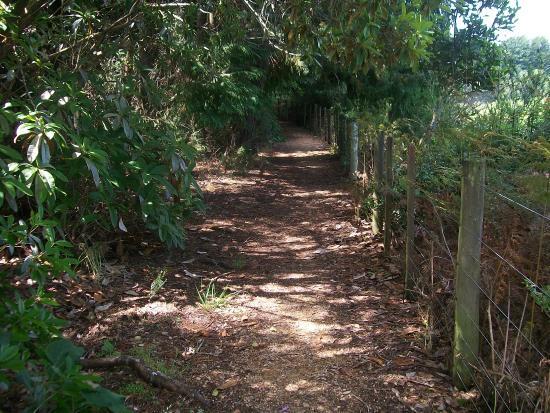 Eketahuna, Новая Зеландия: Cliff Walk