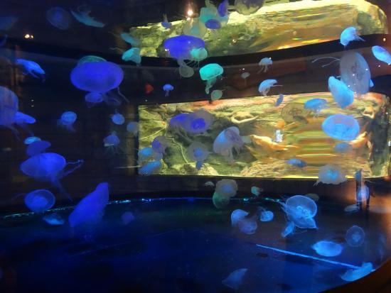 Jelly fish tank picture of mandalay bay aquarium las for Fish tank las vegas