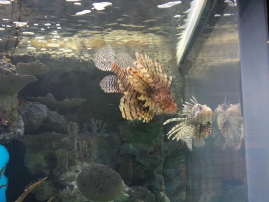 Jelly Fish Tank Picture Of Mandalay Bay Aquarium Las