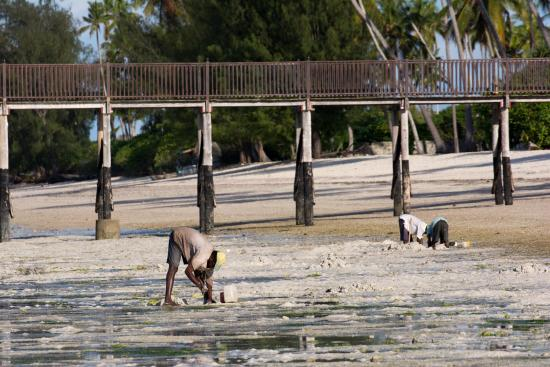 The Residence Zanzibar: locaux 1