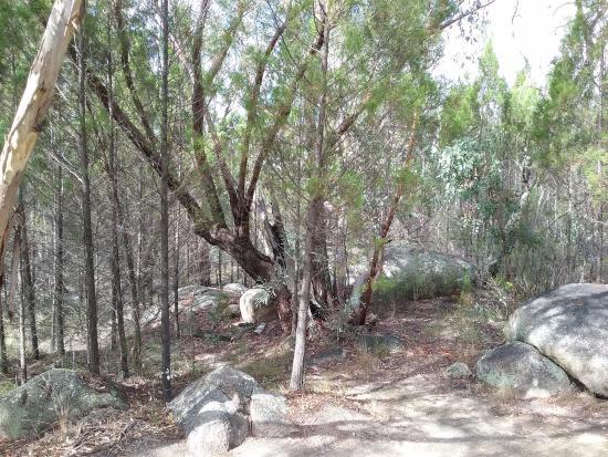 Ballandean, ออสเตรเลีย: View from patio