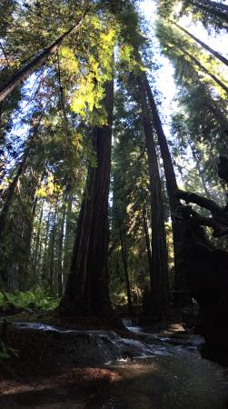 Orr Hot Springs: gorgeous redwoods surround you at the springs