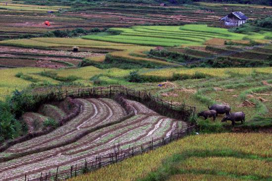 Vietnam Culture Travel Private Day Tours: SAPA MUTLAKA GİTMEK GEREK..HARİKA YER