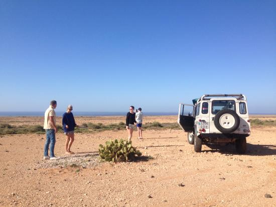 cactus break in the highlands - picture of discovery safari