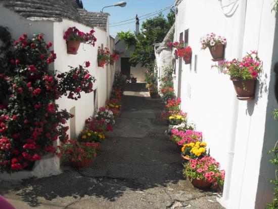 Province of Bari, Italien: fiori