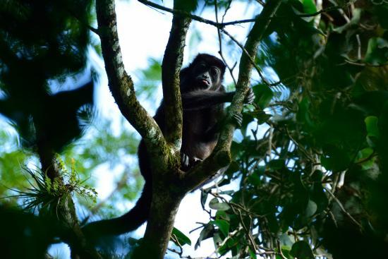 Horquetas, Costa Rica: Ein Spaziergang in der Nähe des Hotels lohnt sich...