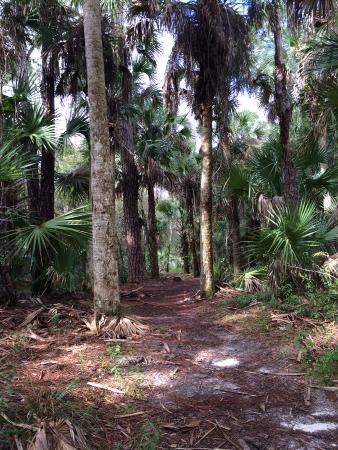 Port Saint Lucie, FL: typical trail