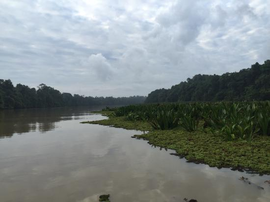 Kinabatangan District, Malaysia: photo0.jpg
