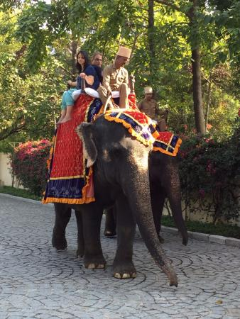 The Oberoi Vanyavilas: elephant ride in the grounds