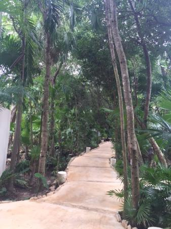 Viceroy Riviera Maya: Hotel grounds. Feels like you're walking through the jungle.