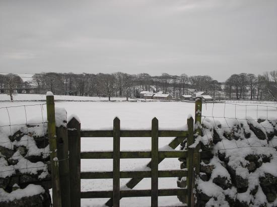 Bell Busk, UK: Green Grove from fields from a far