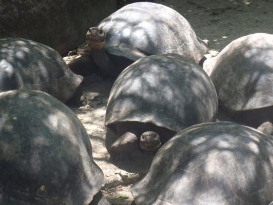 Galapagos Island Hotel - Casa Natura: COnociendo la Fauna