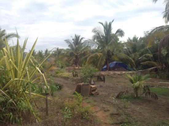 Bamboo House Goa: January 2016 ((( closed