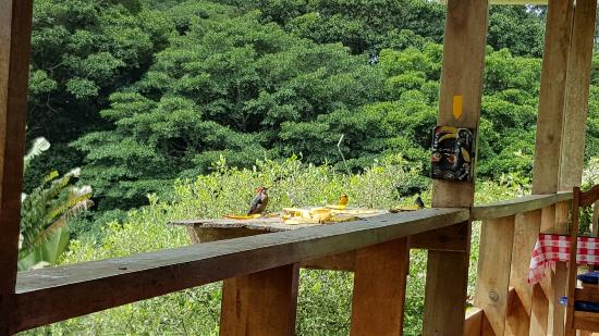 Nuevo Arenal, Costa Rica: 20160118_111834_large.jpg