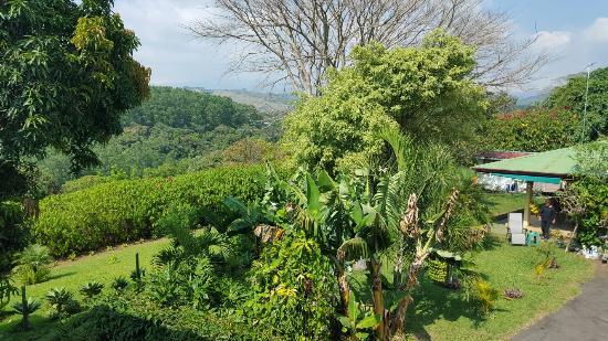 Vista Linda Montaña: 20160116_134249_large.jpg