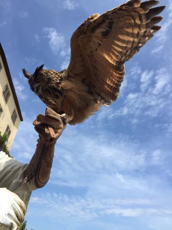 Hassmersheim, Alemania: Falcoaria: é de babar!